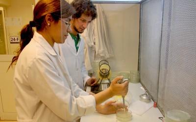 INVESTIGACION SOBRE INSECTICIDAS EN LOS LIMONES PARA WEB NUEVA