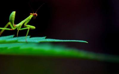 insectos fitófagos-web