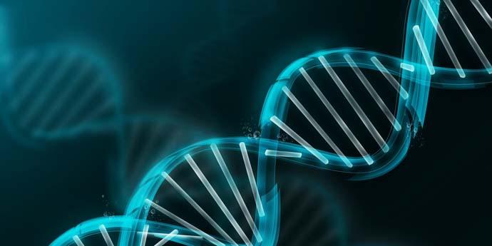 bioinformática-web
