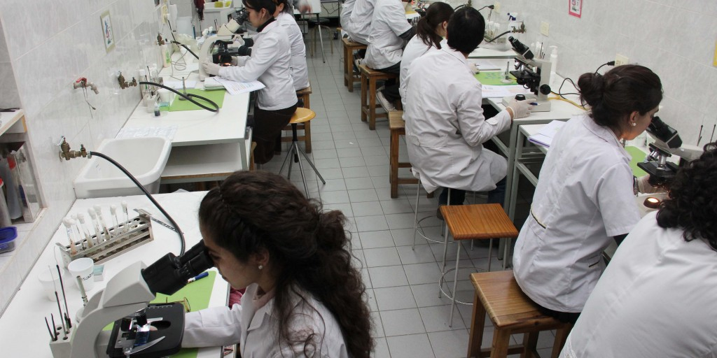 Jóvenes investigadores-web